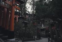 Tori gate at fushimi inari shrine