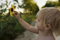 Close-up of boy touching sunflower while standing on field 11100055579| 写真素材・ストックフォト・画像・イラスト素材|アマナイメージズ