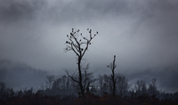 Silhouette of eagles sitting on bare tree against sky