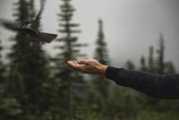 Cropped hand of man reaching towards bird flying in forest 11100058480| 写真素材・ストックフォト・画像・イラスト素材|アマナイメージズ