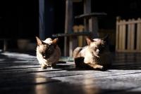 Cats relaxing on floor