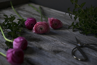 Close-up of pink roses with scissors on wooden table