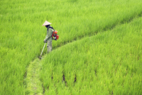 Side view of farmer spraying insecticide on crops in farm 11100058867| 写真素材・ストックフォト・画像・イラスト素材|アマナイメージズ