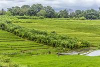 Mid distance view of farmer working in rice paddy 11100058868| 写真素材・ストックフォト・画像・イラスト素材|アマナイメージズ