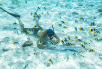High angle view of shirtless man snorkeling in sea by school of fish 11100059005| 写真素材・ストックフォト・画像・イラスト素材|アマナイメージズ