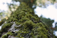 Low angle view of moss growing on tree in forest