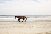 Side view of horse walking at beach against sky