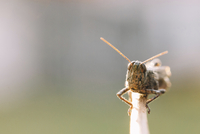Close-up of grasshopper on twig