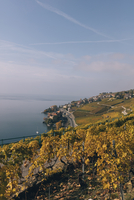 High angle view of terraced vineyard by Lake Geneva against sky 11100061080| 写真素材・ストックフォト・画像・イラスト素材|アマナイメージズ