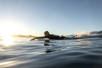 Side view of male surfer lying on surfboard in sea during sunset 11100061668| 写真素材・ストックフォト・画像・イラスト素材|アマナイメージズ