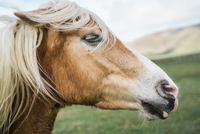 Close-up side view of wild horse at field