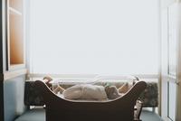 Side view of baby sleeping in crib at home 11100061953| 写真素材・ストックフォト・画像・イラスト素材|アマナイメージズ