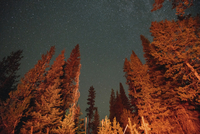 Low angle view of trees against star field at Crater Lake National Park 11100062052| 写真素材・ストックフォト・画像・イラスト素材|アマナイメージズ