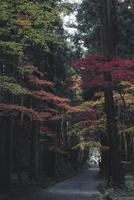 Narrow footpath amidst autumn trees at park 11100062106| 写真素材・ストックフォト・画像・イラスト素材|アマナイメージズ