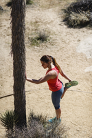 High angle view of female hiker exercising by tree at Joshua Tree National Park 11100062185| 写真素材・ストックフォト・画像・イラスト素材|アマナイメージズ