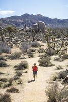 High angle view of female hiker running at Joshua Tree National Park during sunny day 11100062187| 写真素材・ストックフォト・画像・イラスト素材|アマナイメージズ