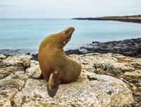 Seal on rocky shore against sky 11100062394| 写真素材・ストックフォト・画像・イラスト素材|アマナイメージズ