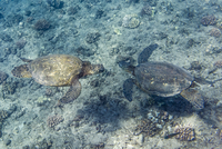 High angle view of turtles in sea