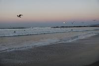Seagulls flying over Venice beach against sky during sunset 11100062606| 写真素材・ストックフォト・画像・イラスト素材|アマナイメージズ