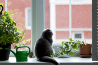 Cat looking through window while sitting by potted plants 11100064321| 写真素材・ストックフォト・画像・イラスト素材|アマナイメージズ