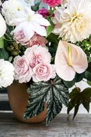 Close-up of flower pot on table 11100064593| 写真素材・ストックフォト・画像・イラスト素材|アマナイメージズ