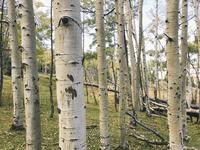 Tree trunks on grassy field