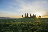 Farm with cypress trees, sunrise, UNESCO World Heritage