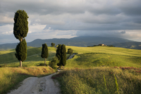 Landscape with dirt road and cypresses, UNESCO World