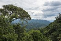 Jungle, habitat of the Mountain Gorillas, Bwindi 11102000501| 写真素材・ストックフォト・画像・イラスト素材|アマナイメージズ