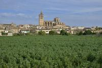 Parish church Nostra Senyora dels Angels, Sineu, Majorca 11102001452  写真素材・ストックフォト・画像・イラスト素材 アマナイメージズ