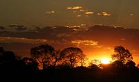Sunset in the Pantanal, Mato Grosso do Sul, Brazil, South 11102001645| 写真素材・ストックフォト・画像・イラスト素材|アマナイメージズ