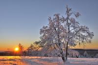 Snow covered trees at sunrise, frost, winter landscape 11102001825| 写真素材・ストックフォト・画像・イラスト素材|アマナイメージズ