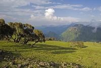 View looking towards the Nortern Escarpment near Sankaber, Simien Mountains National Park, Ethiopia