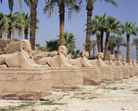 Avenue of sphinxes, Luxor Temple, Luxor, Thebes