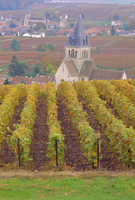 View Of The Chapel Of St. Lie Over Vineyards Of Champagne, Autumn