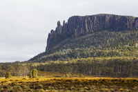 Mount Oakleigh at New Pelion on the Overland Track, Cradle Mountain Lake St. Clair National Park, part of Tasmanian Wilderness,