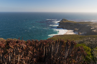 Cape of Good Hope, Cape of Good Hope Nature Reserve, Western Cape