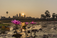 Sunrise over the west entrance to Angkor Wat, Angkor, Siem Reap, Cambodia, Indochina, Southeast Asia 11104011726| 写真素材・ストックフォト・画像・イラスト素材|アマナイメージズ