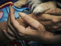 Woman's hands with dog paw 11107002485| 写真素材・ストックフォト・画像・イラスト素材|アマナイメージズ