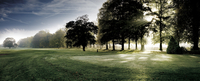Field with trees at Mottram Hall, England