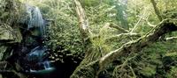 Forest waterfall in United Kingdom 11107002650| 写真素材・ストックフォト・画像・イラスト素材|アマナイメージズ