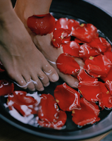 Woman's feet soaking in bowl with red petals 11107003056| 写真素材・ストックフォト・画像・イラスト素材|アマナイメージズ