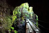 ハワイ島 キラウエア火山 サーストン・ラバ・チューブ 28021000519| 写真素材・ストックフォト・画像・イラスト素材|アマナイメージズ