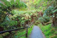 ハワイ島 キラウエア火山 サーストン・ラバ・チューブ 28021000521| 写真素材・ストックフォト・画像・イラスト素材|アマナイメージズ