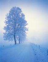 霧氷 28029000478  写真素材・ストックフォト・画像・イラスト素材 アマナイメージズ
