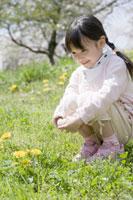 タンポポを見つめる女の子 28054000359| 写真素材・ストックフォト・画像・イラスト素材|アマナイメージズ
