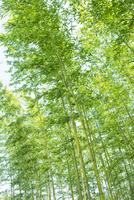 竹林 28056006598| 写真素材・ストックフォト・画像・イラスト素材|アマナイメージズ