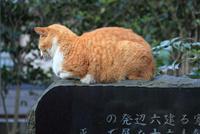 江ノ島の猫 28127001143| 写真素材・ストックフォト・画像・イラスト素材|アマナイメージズ