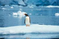ペンギン 28144000351| 写真素材・ストックフォト・画像・イラスト素材|アマナイメージズ