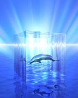 透明なキューブの中のイルカ(CG)